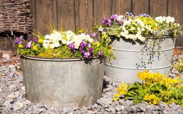 Rośliny w nietypowych pojemnikach. Moda na donice z recyklingu